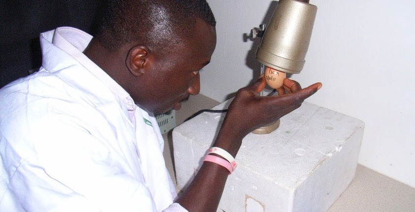 Workshop participant in Ghana candling eggs to check embryo viability for vaccine production