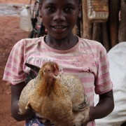 Family poultry KYEEMA 5