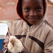 Family poultry KYEEMA 4