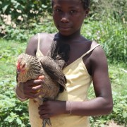 Family poultry KYEEMA 1