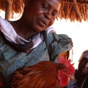 Family poultry KYEEMA 6