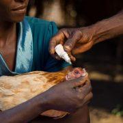 Chickens4Africa winning
