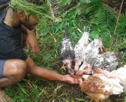 KYEEMA Fiji 2